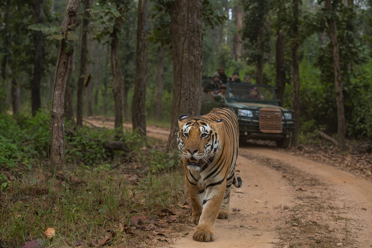 Don't miss an adventurous voyage to the best of India's safaris
