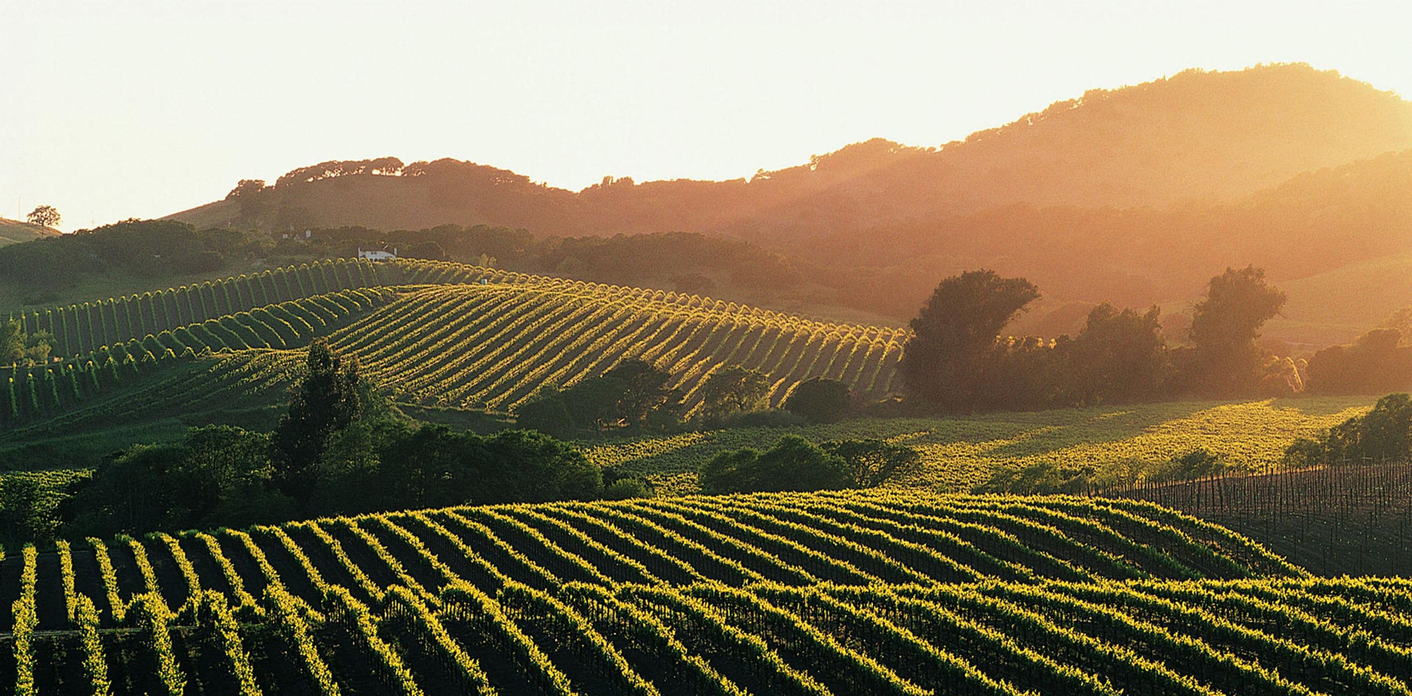 sonoma valley wine regions