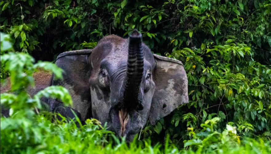 elephant convservation