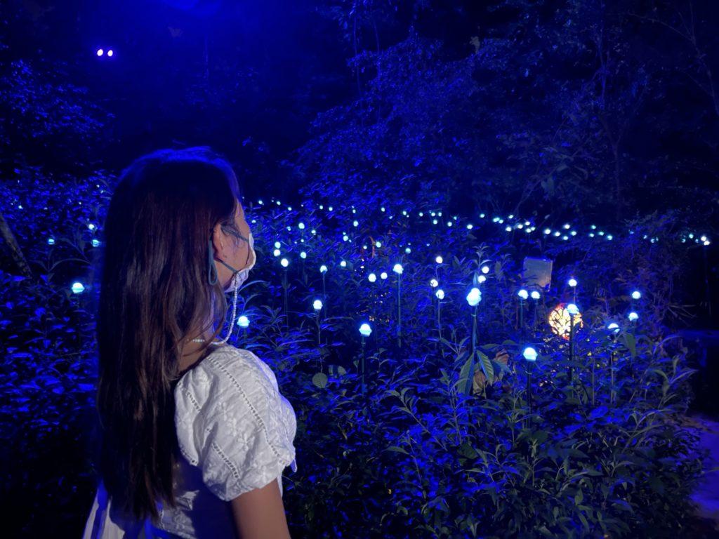 Raiforest Lumina Shimmering Islands