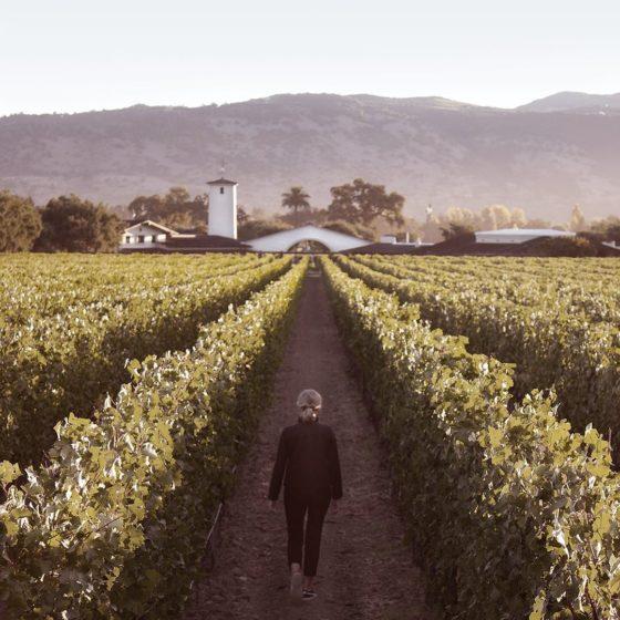 Robert Mondavi Winery (Oakville, California, USA)
