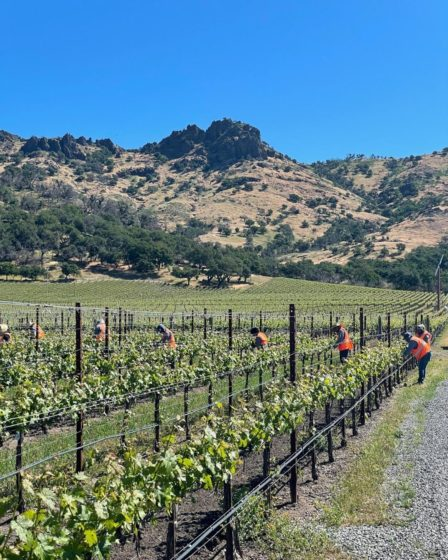 Stag's Leap Wine Cellar (Yountville, CA, USA)