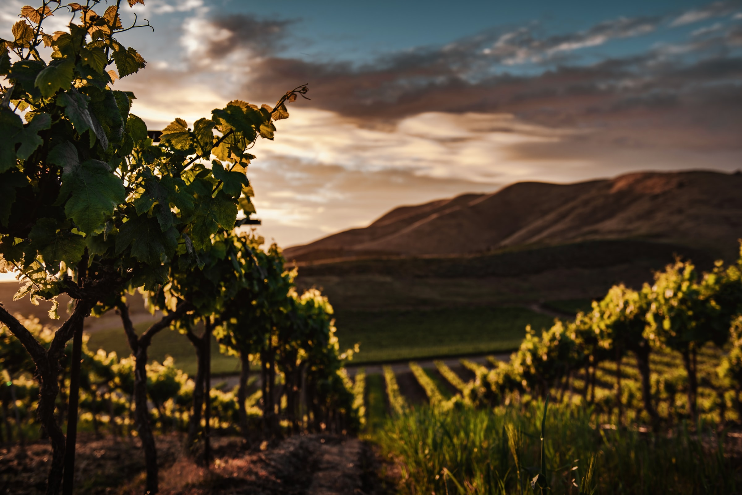 The World's Most Beautiful Wineries Revealed