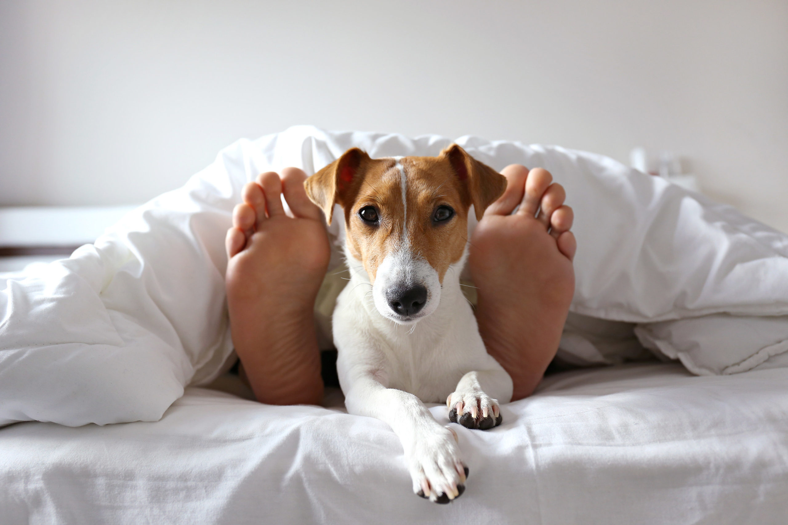 Dog-Friendly Hotels Around The World Perfect For A Fur Kid Vacation