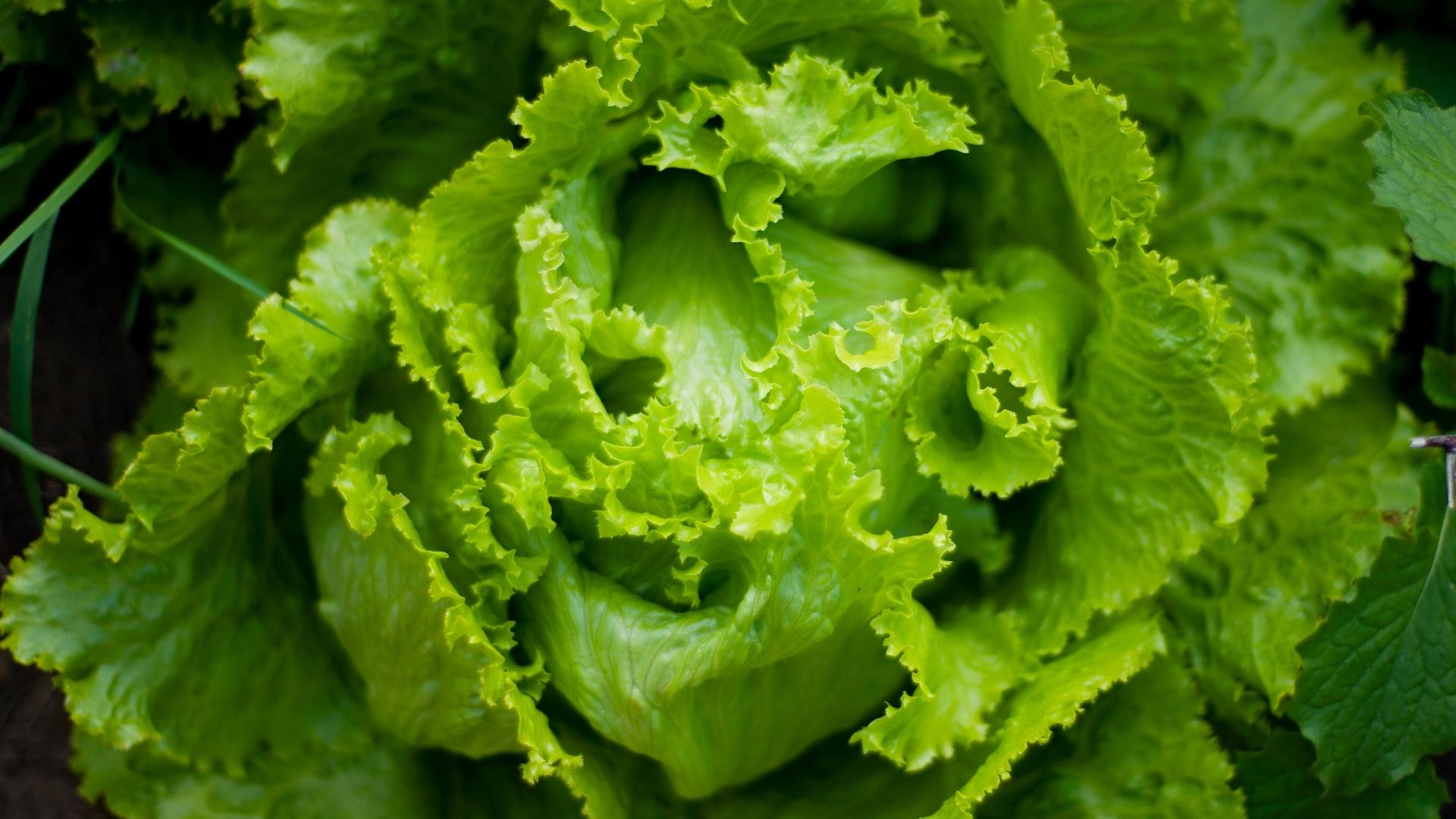 edible plants to grow